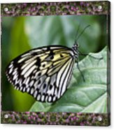 Mountain Butterfly Acrylic Print by Bell And Todd
