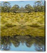 Mountain Button Grass Acrylic Print