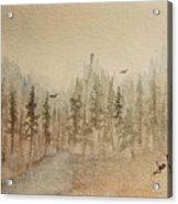 Mountain Evergreens Acrylic Print
