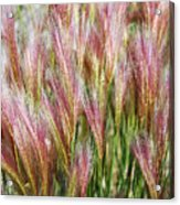 Mountain Grass Acrylic Print