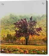 Mountain Haze In A Oak Glen Autumn Acrylic Print