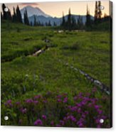 Mountain Heather Sunset Acrylic Print