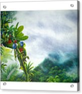 Mountain High - St. Lucia Parrots Acrylic Print