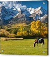 Mountain Horse Acrylic Print
