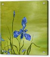 Mountain Iris Acrylic Print