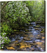 Mountain Laurels Light Up Panther Creek Acrylic Print