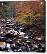 Mountain Leaves In Stream Acrylic Print