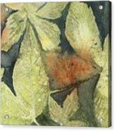 Mountain Leaves Acrylic Print
