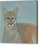 Mountain Lion - Pastels - Color - 8x12 Acrylic Print