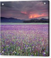 Mountain Meadow Purple Acrylic Print