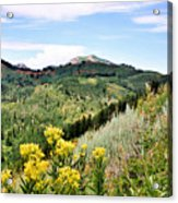 Mountain Meadows Acrylic Print