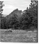 Mountain Peak Through The Trees In Black And White Acrylic Print