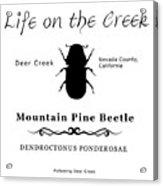 Mountain Pine Beetle Black On White Acrylic Print