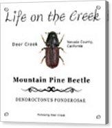 Mountain Pine Beetle Color Acrylic Print