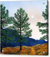 Mountain Pines Acrylic Print