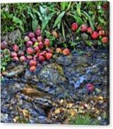Mountain Stream In Oak Glen Acrylic Print