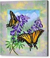 Mountain Swallowtail Acrylic Print