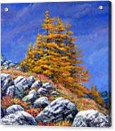 Mountain Tamaracks Acrylic Print