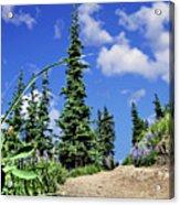 Mountain Trail - Olympic National Park Acrylic Print
