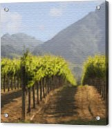 Mountain Vineyard Acrylic Print