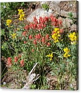 Mountain Wild Flowers Acrylic Print