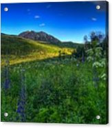 Mountain Wildflowers And Light Whispers Acrylic Print