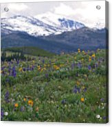 Mountain Wildfowers Acrylic Print