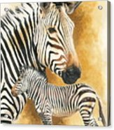 Mountain Zebra Acrylic Print