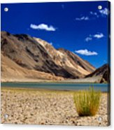 Mountains And Green Vegetation Chagor Tso - Lake Leh Ladakh Jammu Kashmir India Acrylic Print
