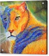 Mountian Lion 1 Acrylic Print