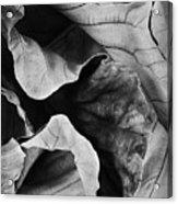 Mounts Botanical Garden 2363 Acrylic Print