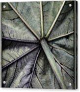 Mounts Botanical Gardens 2360 Acrylic Print