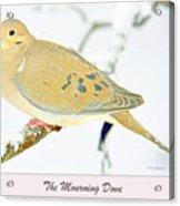 Mourning Dove In Snow Animal Portrait Acrylic Print