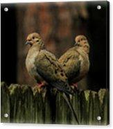 Mourning Doves Acrylic Print