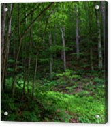 Mouth Of Pollly Hollow Acrylic Print