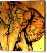 Moving Elephant Acrylic Print