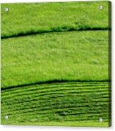 Mowing Hay  Acrylic Print by Thomas R Fletcher