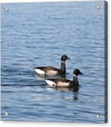 Mr. And Mrs. Brant Acrylic Print