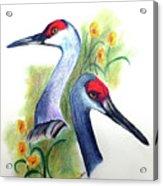 Mr And Mrs Sandhill Cranes Acrylic Print