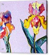 Mr. And Mrs. Yellow Iris Acrylic Print