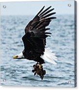 Mr. Bald Eagles Catch Acrylic Print