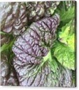 Mr. Cabbage's Little Secret Acrylic Print