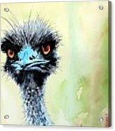 Mr. Grumpy Acrylic Print