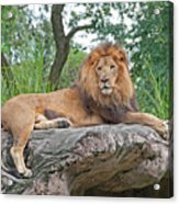 Mr Majestic Acrylic Print