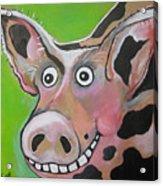 Mr Pig Acrylic Print