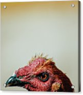 Mr. Rooster II Acrylic Print