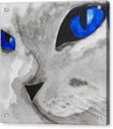 Mr Silver Acrylic Print