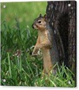 Mr. Squirrel Acrylic Print