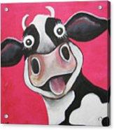 Mrs Cow Acrylic Print