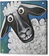 Mrs Sheep Acrylic Print